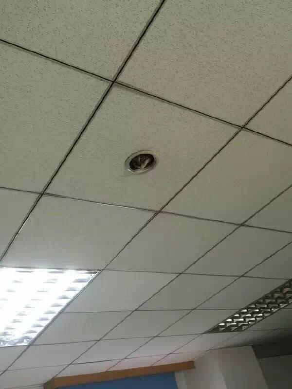 chat-cache-plafond-2