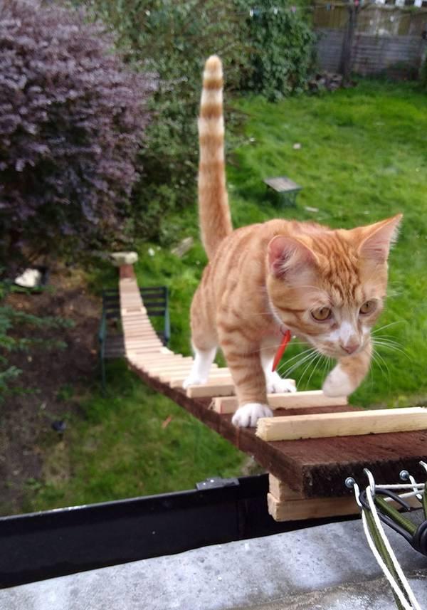 chat-echelle-nelson-3