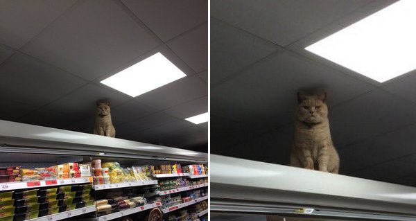 Ce chat a un rituel embêtant pour ce supermarché, mais