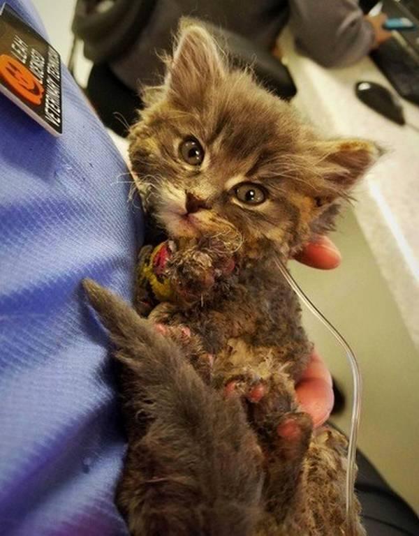 chatons-sauve-incendie-1