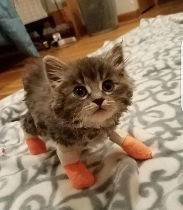 chatons-sauve-incendie-6