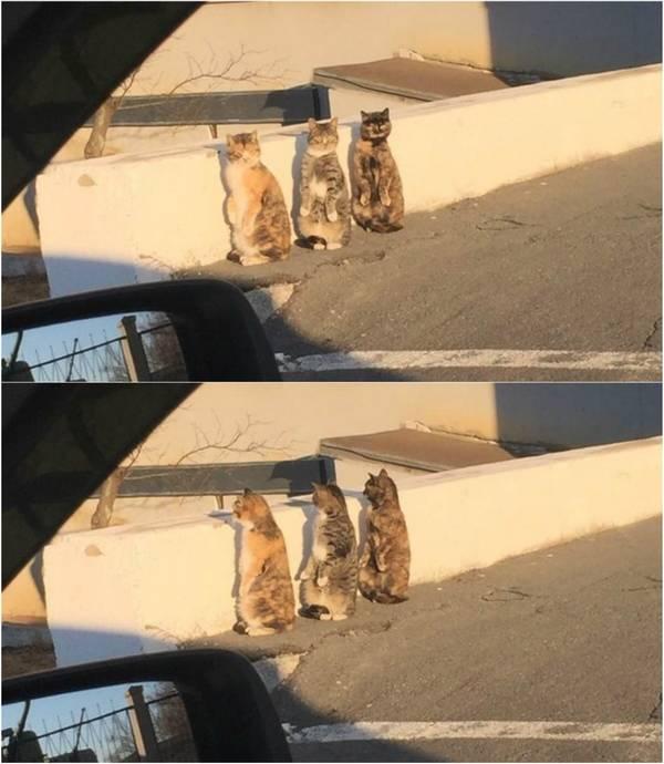 chats-conspirent-detruire-13