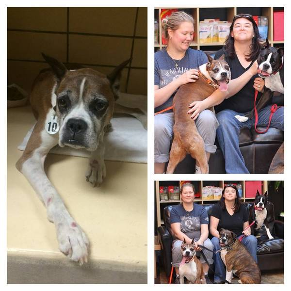 https://www.facebook.com/TrioAnimalFoundation/photos/a.84739614954.21040.71480294954/10150586258654955/?type=3&theater