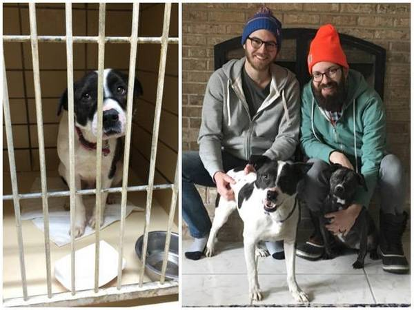 https://www.facebook.com/TrioAnimalFoundation/photos/a.84739614954.21040.71480294954/10150641720294955/?type=3&theater