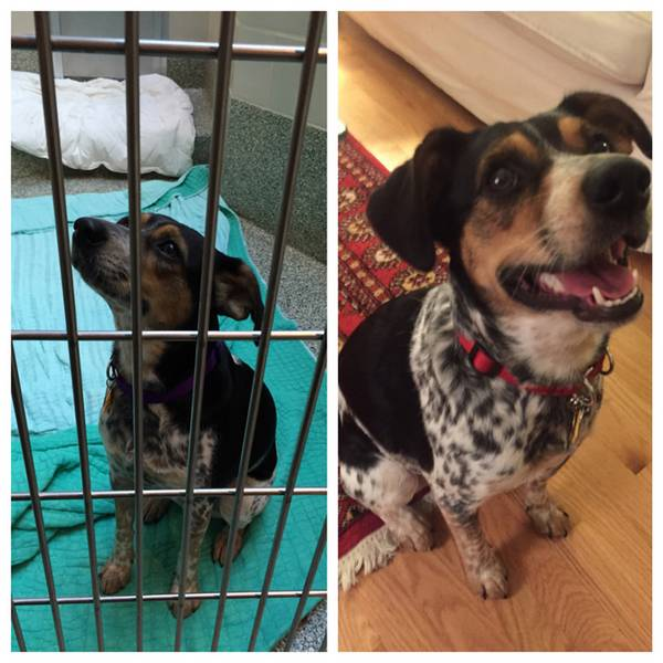 http://dogtime.com/dog-health/general/21863-38-happy-rescue-dogs-before-and-after-photo-gallery#/slide/30
