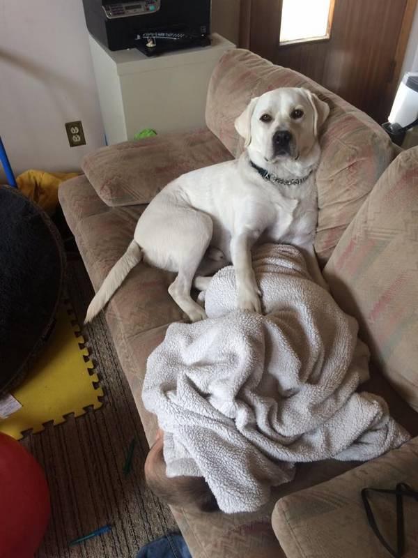 lego-tupper-autisme-chien-1