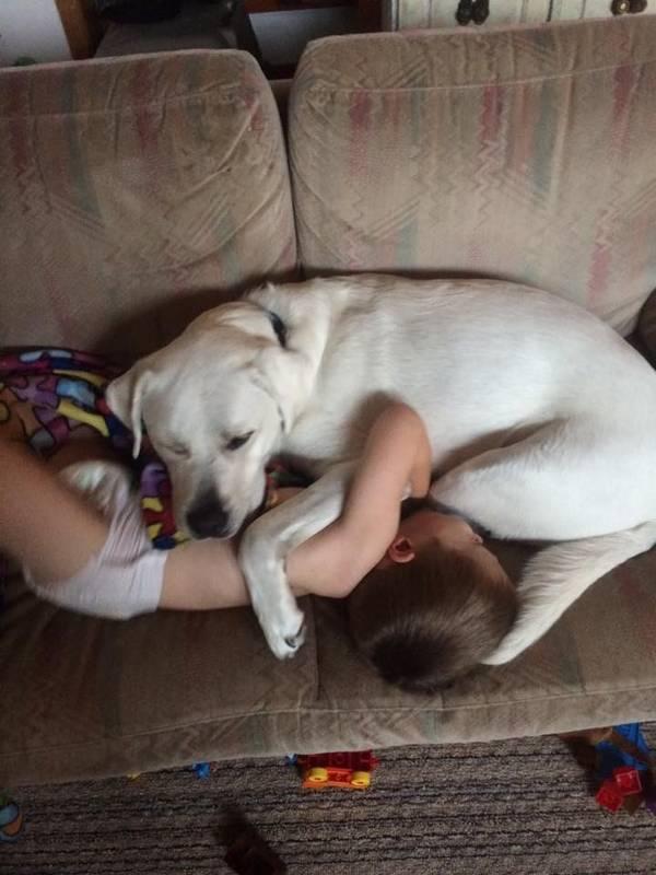 lego-tupper-autisme-chien-11