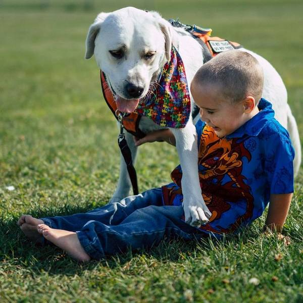 lego-tupper-autisme-chien-8