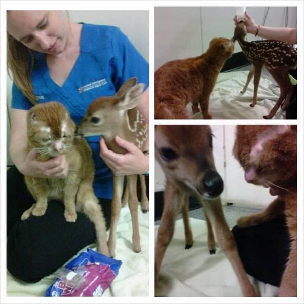 Animal Emergency Hospital and Urgent Care