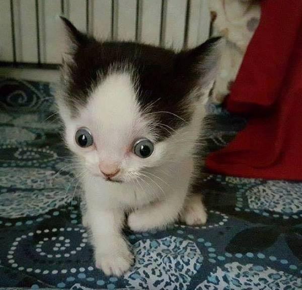 Photo : Super Hero The Hydrocephalic Cat and Zeke