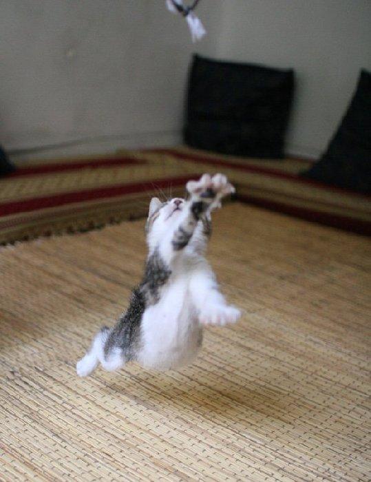http://goodcough.smugmug.com/photos/66388970-O.jpg