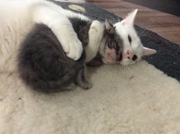 benny-chat-pere-adoptif-9