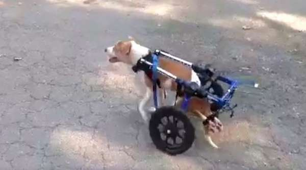cascade-chienne-paralysee-4