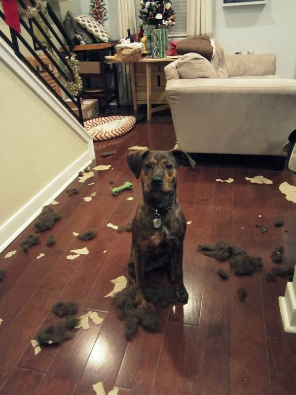http://www.cutenessoverflow.com/these-dogs-made-a-huge-mess/