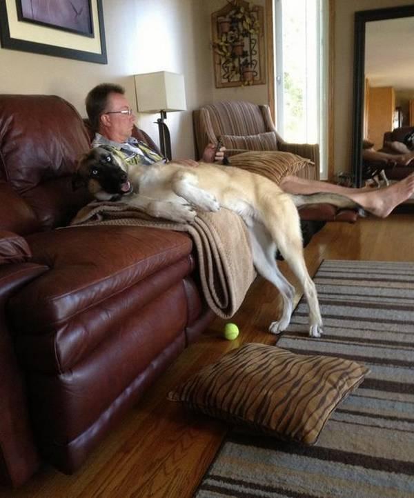 http://acidcow.com/pics/52994-funny-dogs-41-pics.html