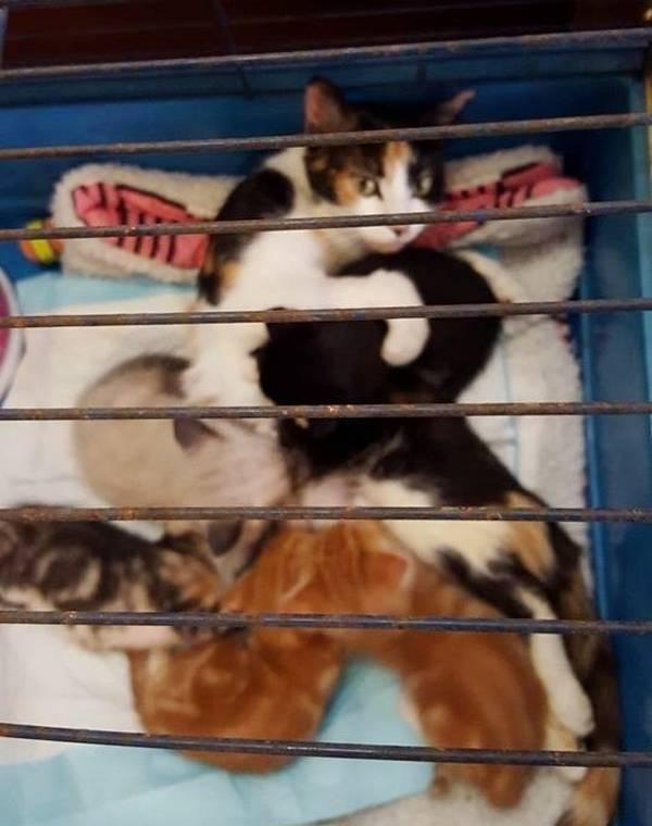 maman-chat-paralysee-chatons-4
