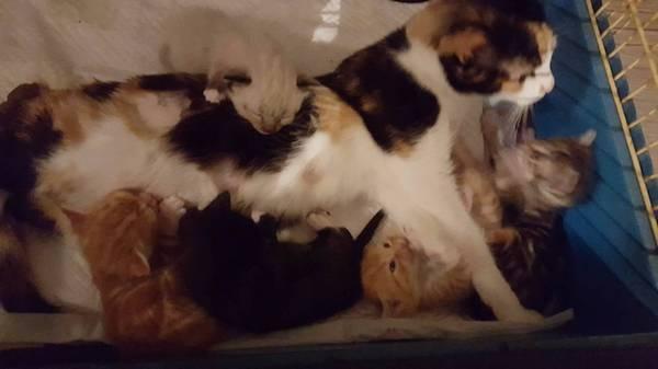 maman-chat-paralysee-chatons-6