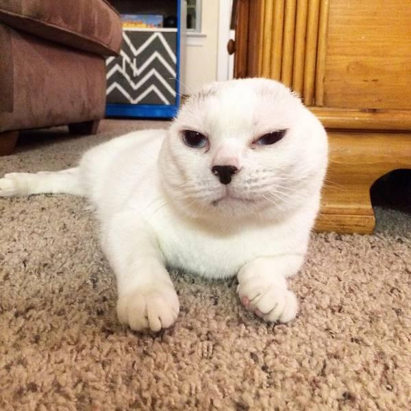 otitis-chat-sans-oreilles-molly-2