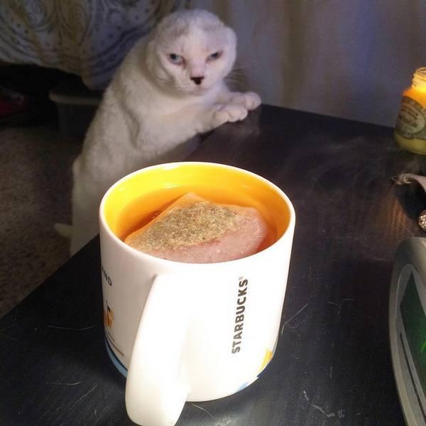 otitis-chat-sans-oreilles-molly-7