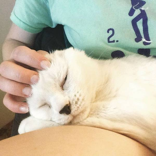 otitis-chat-sans-oreilles-molly-9