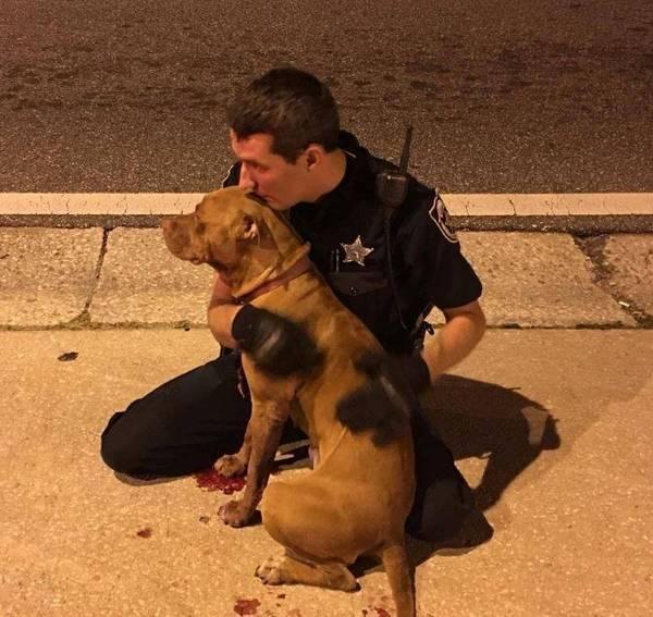 pitbulls-chiennes-policiers-5