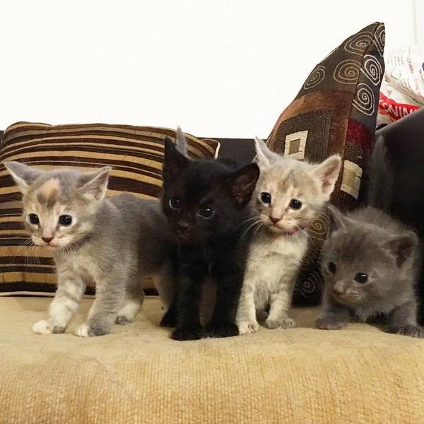 soeurs-chattes-8-chatons-2
