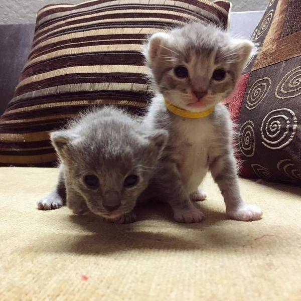 soeurs-chattes-8-chatons-4
