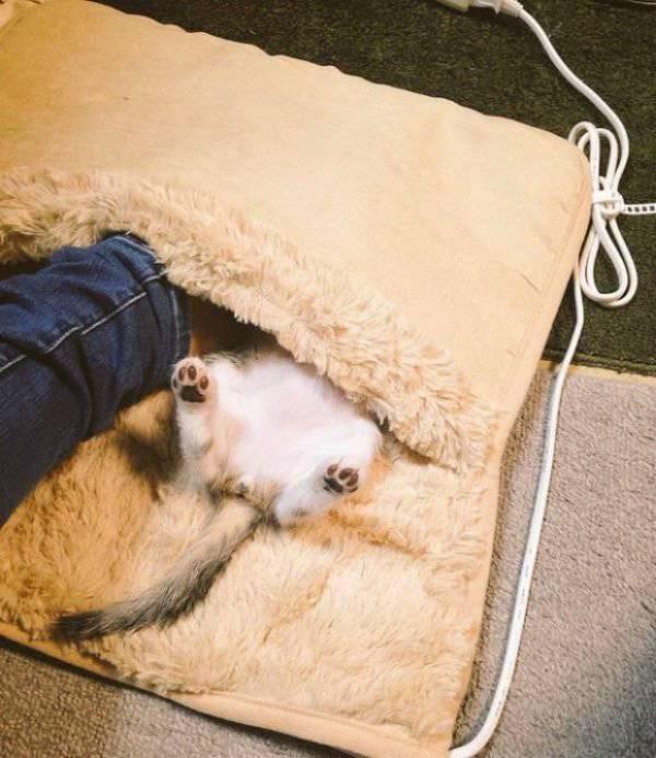 chatons-chauffe-pieds-9