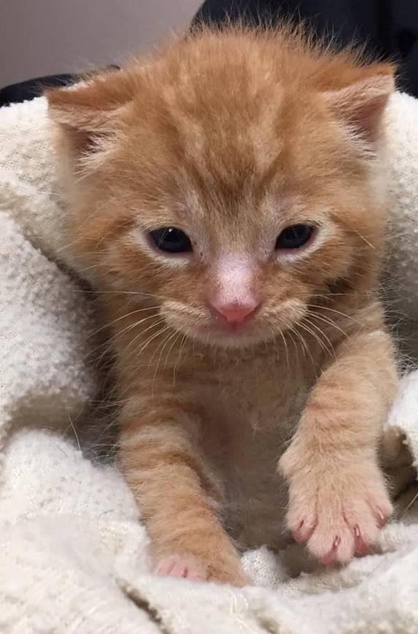 Rencontre pour un plan cul rencontre chat adulte et chaton