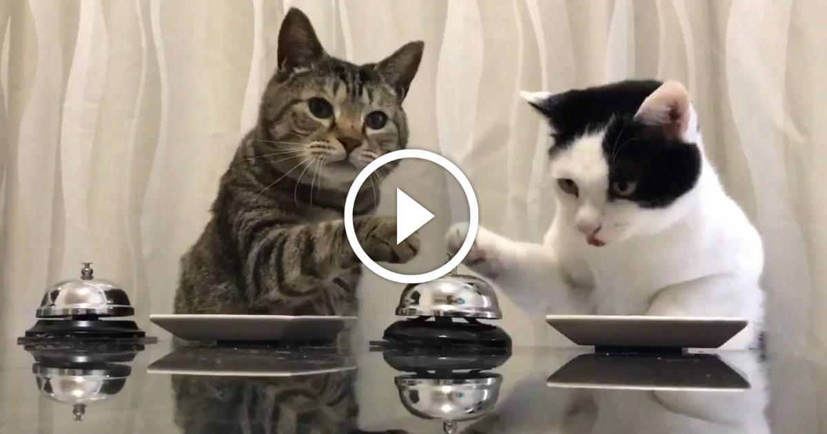 ces deux chats ont parfaitement compris comment avoir des. Black Bedroom Furniture Sets. Home Design Ideas
