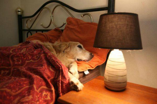 Un homme demande à un hôtel s\'il peut emmener son chien et reçoit ...