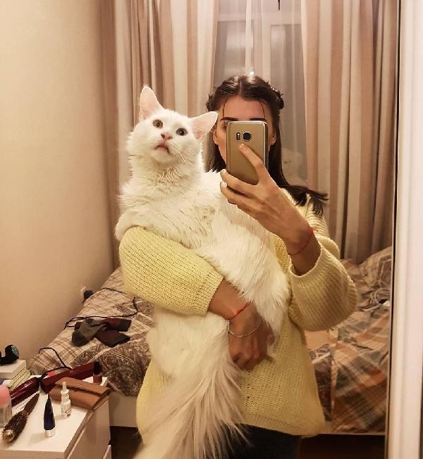 Ce chat géant et très affectueux montre tous les jours à quel point il aime sa maîtresse ...