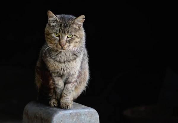 Chat rencontre chaton
