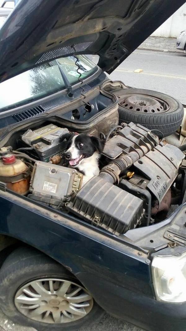 une femme tombe en panne et d couvre un chien l 39 int rieur du moteur de sa voiture animaaaaals. Black Bedroom Furniture Sets. Home Design Ideas