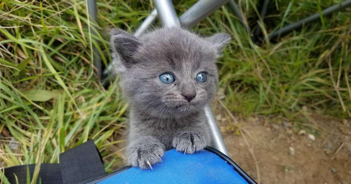 Un homme est en train de p cher quand un chaton en d tresse bouleverse sa journ e animaaaaals - Quand tailler un pecher ...