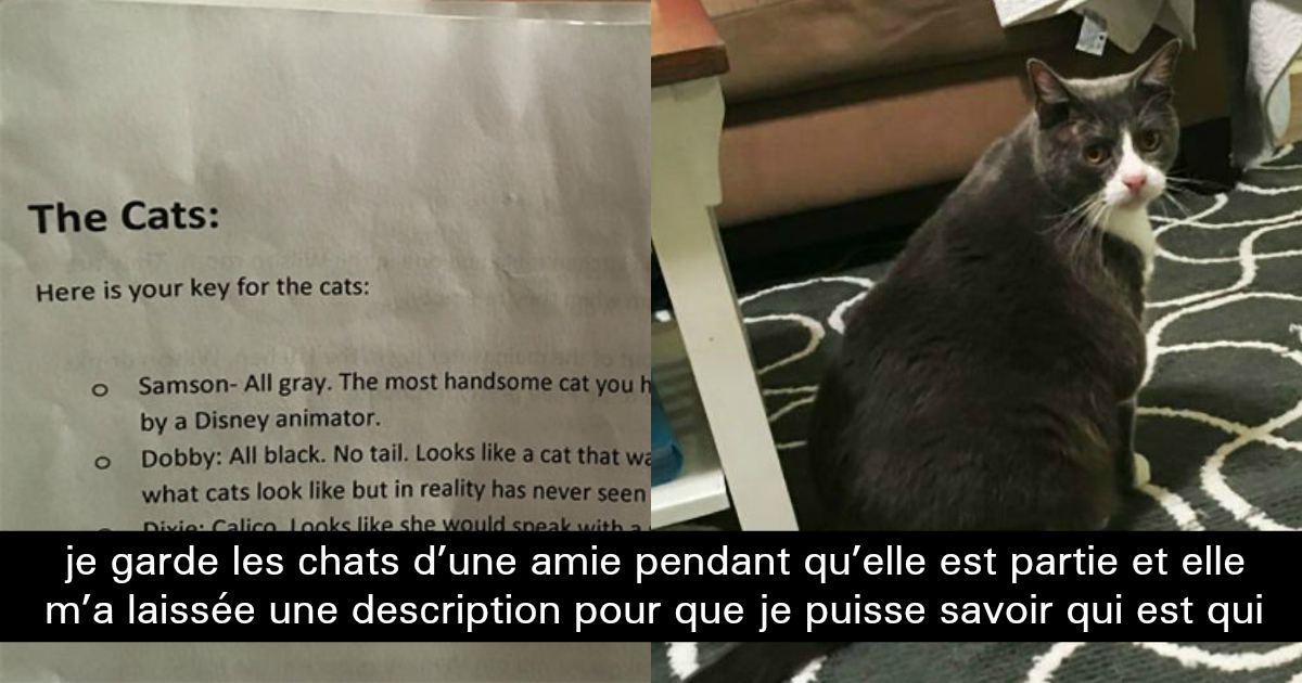 une femme qui doit garder des chats re oit une description hilarante de chacun d entre eux. Black Bedroom Furniture Sets. Home Design Ideas