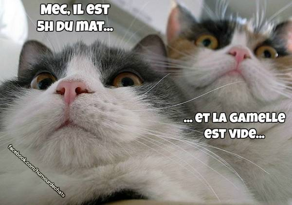 [Image: chats-humour-texte-12.jpg]