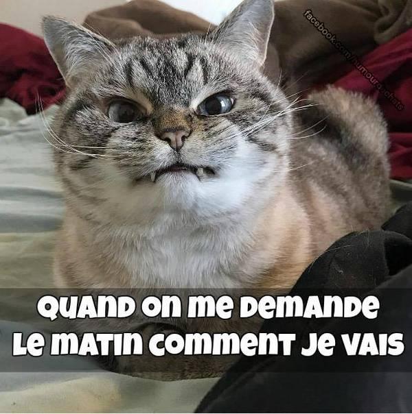 """Résultat de recherche d'images pour """"images chats humour"""""""