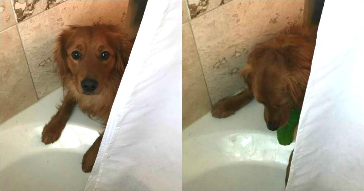 ce chien pense que ses ma tres d testent les bains comme lui alors il les r conforte d une. Black Bedroom Furniture Sets. Home Design Ideas