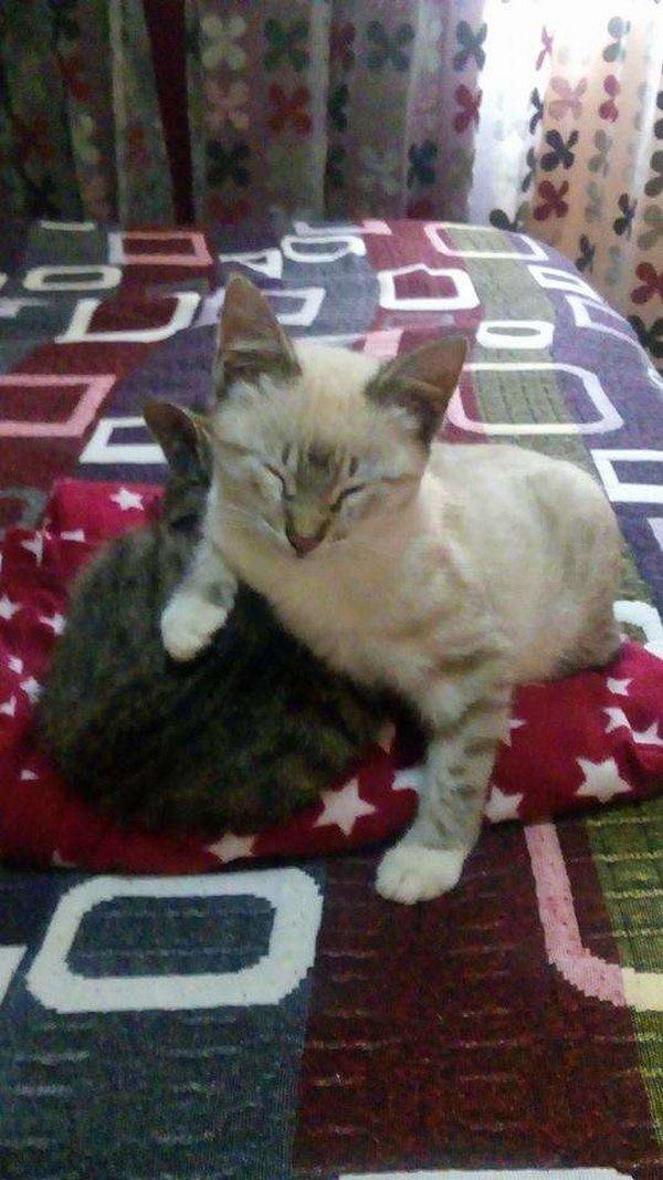 cette petite chatte revient chez elle avec un b b un peu. Black Bedroom Furniture Sets. Home Design Ideas