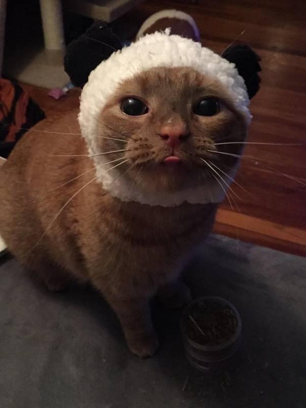 13 photos de chats drôles et parfaites pour avoir un grand